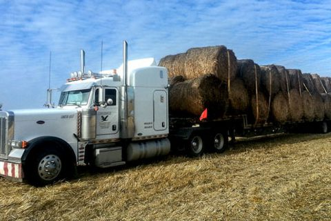 Permalink to:Hay and Straw Hauling